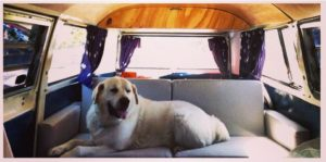 Happy dog in a Vintage VW campervan