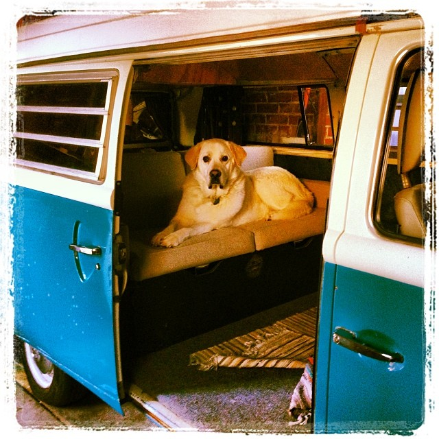 Cute dog in VW camper
